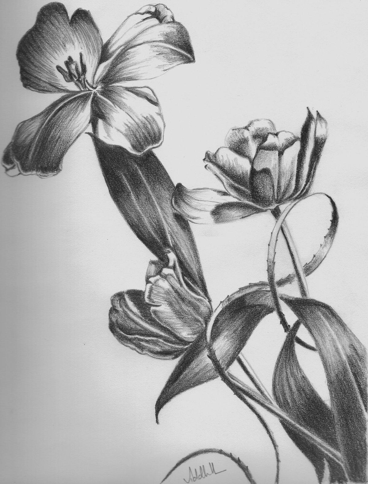 Картинки рисунки цветы карандашом, днем рождения