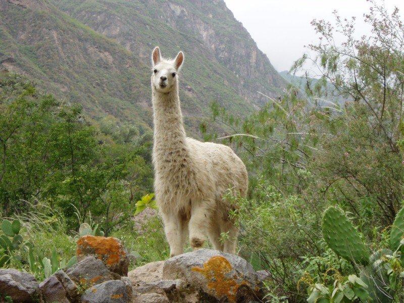 Природа америка южная животные фото
