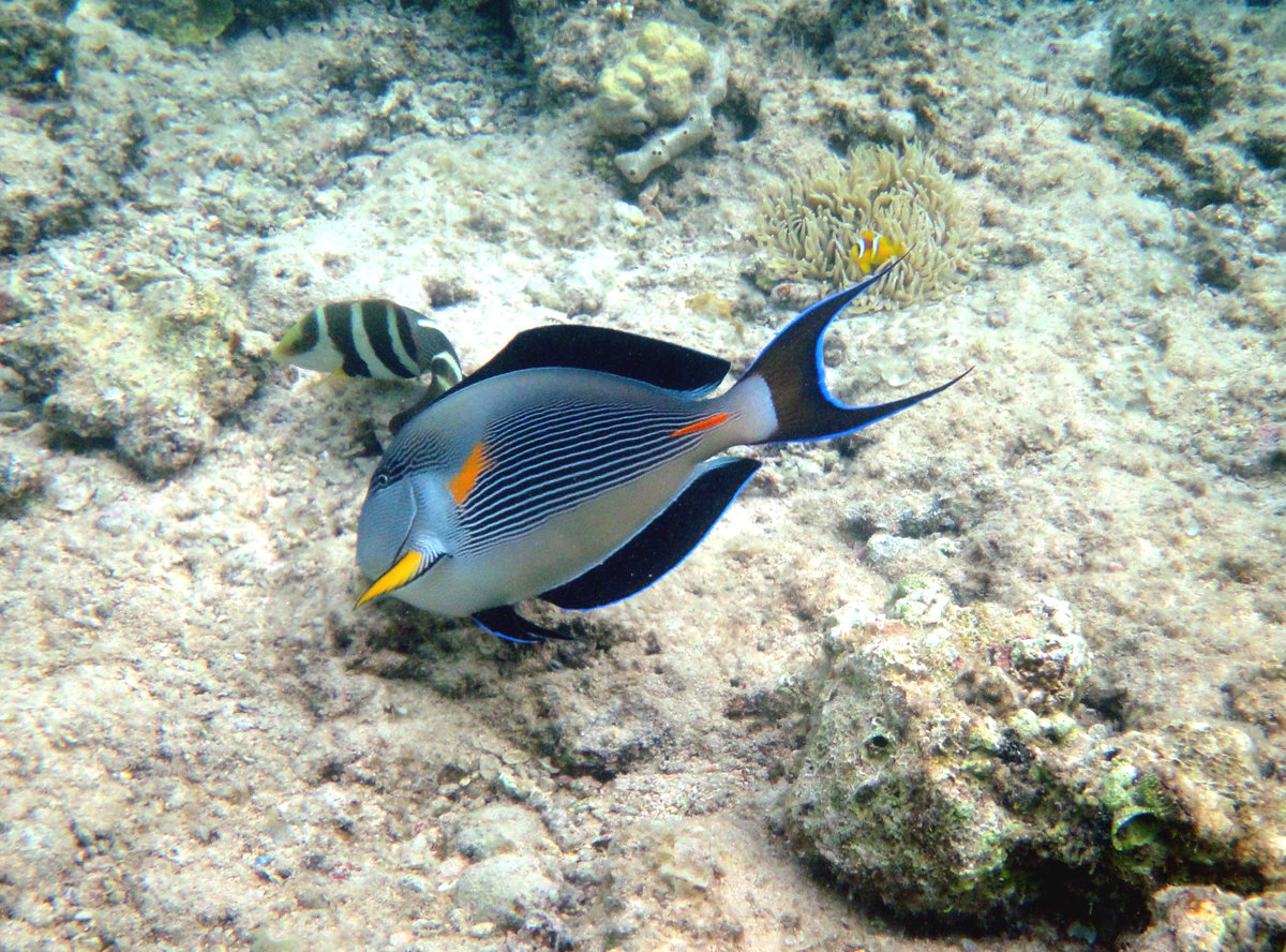 все рыбы египта картинки с названиями знают одно нужно