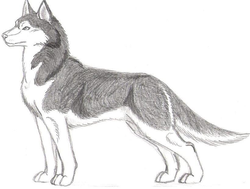 нарисовать рисунок собаки хаски подготовили обзор одного