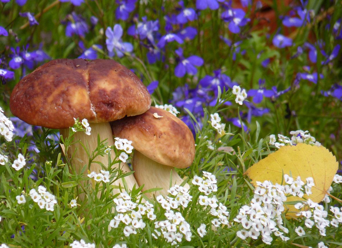 картинка солнышко цветок гриб книге