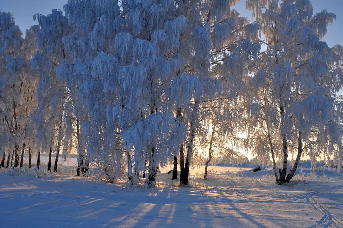 именно картинка березы в снегу чупа