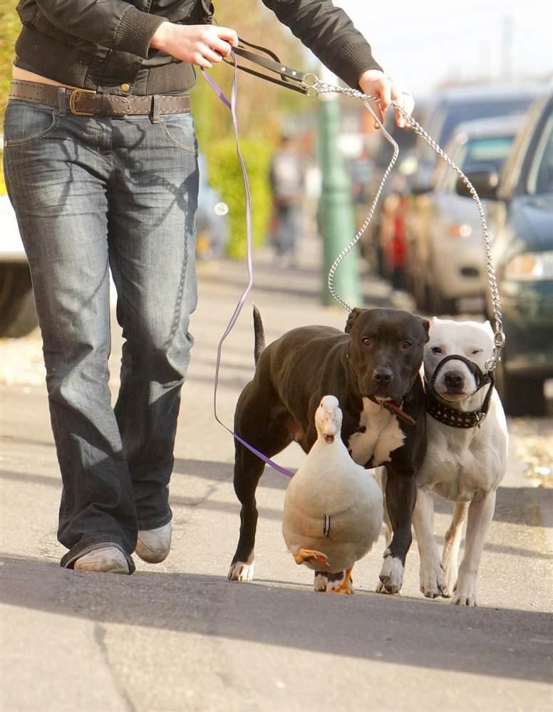 Гулять с собакой смешные картинки