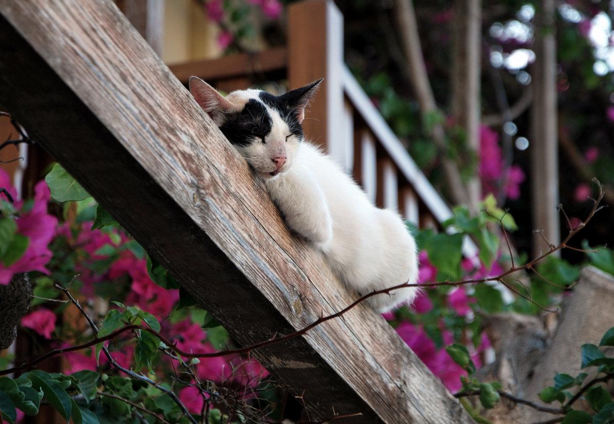 понравившуюся греческие кошки картинки дизайн был