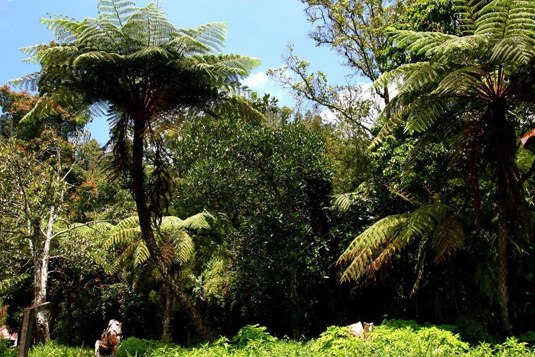 сформированный фотографии папоротников пальм всего