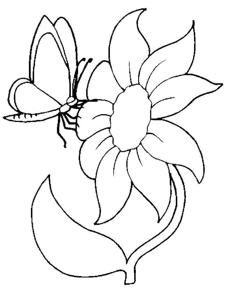 Цветы картинки для детей раскраски печать