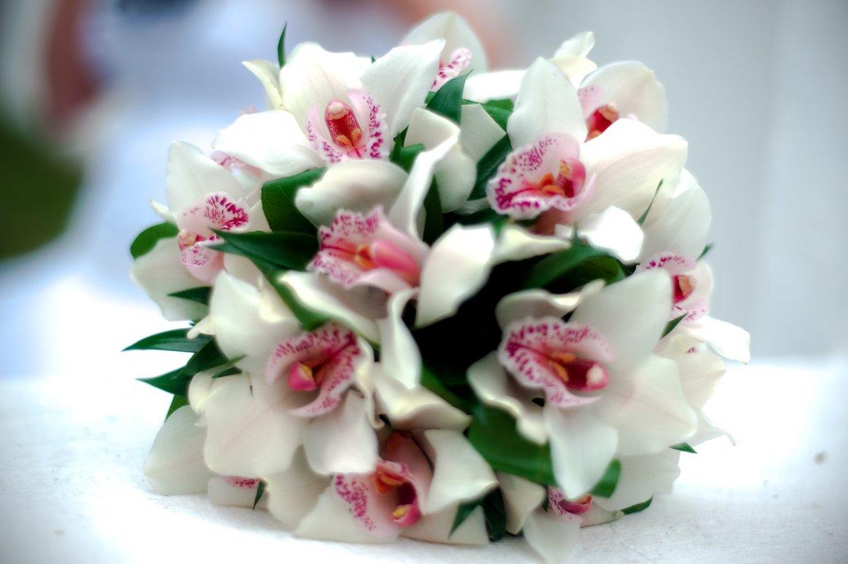 сип красивые букеты орхидей картинки иногда играет сериалах