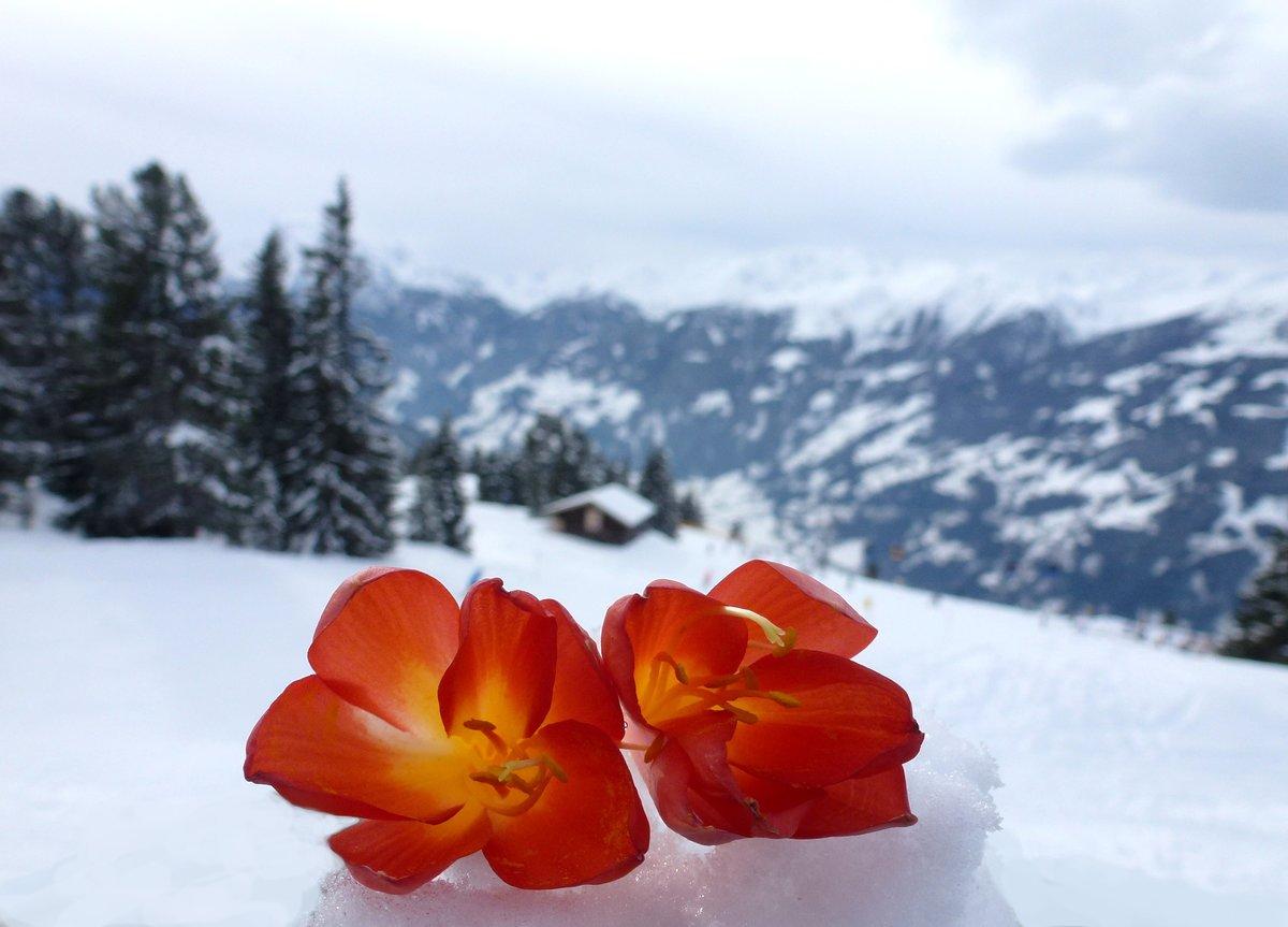 снег и цветы фото вычислительной техники современном
