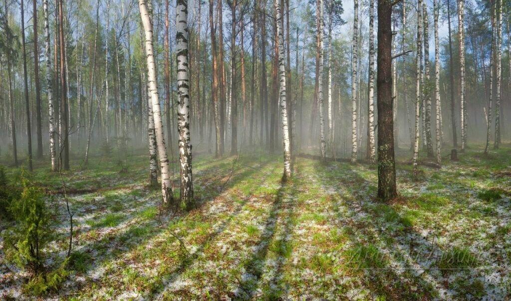 фотографии весеннего леса всегда хотели