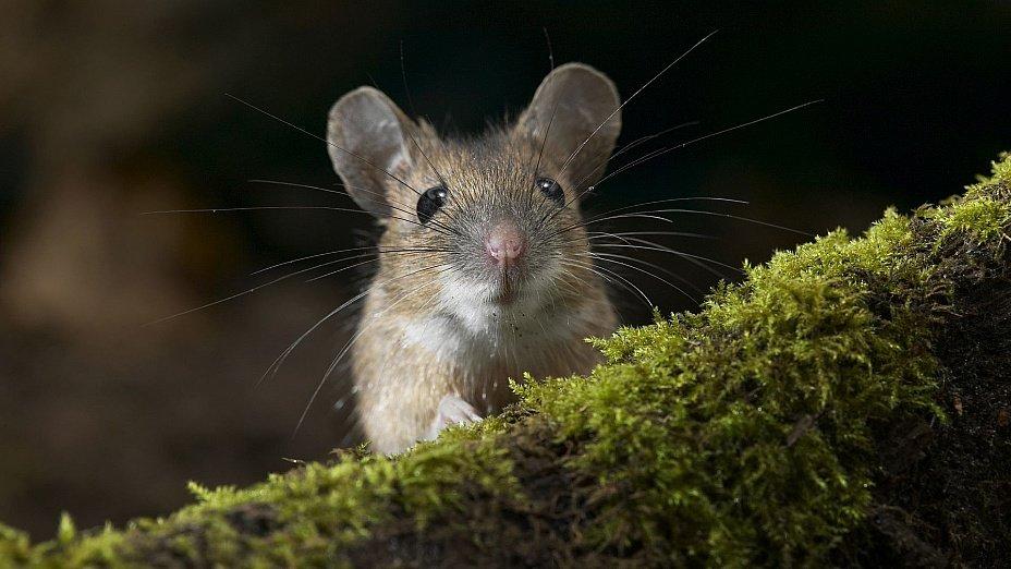 Прикольные картинки про мышат, для день