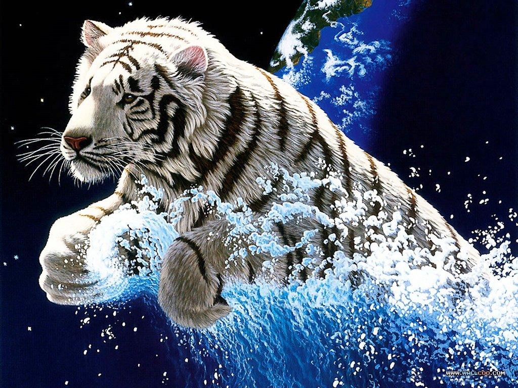 Белые тигры открытки