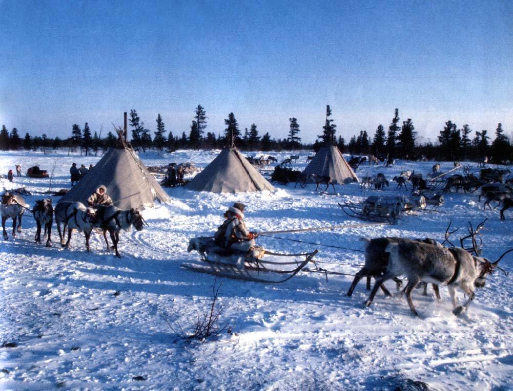 Картинки крайнего севера для детей