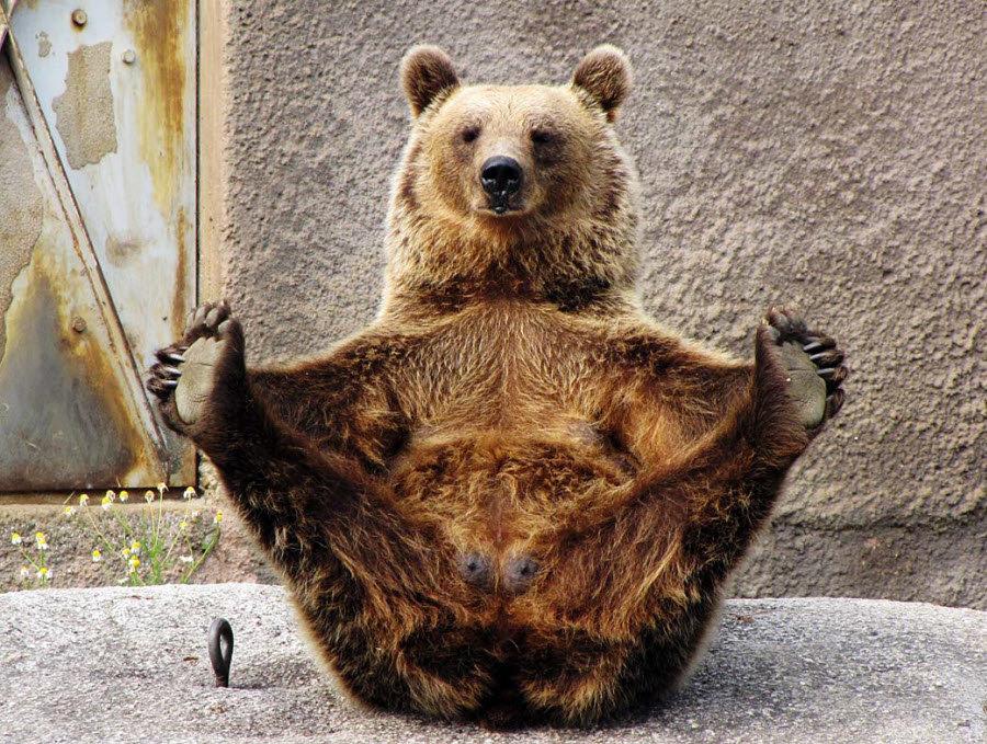 Картинка прикольный медведь