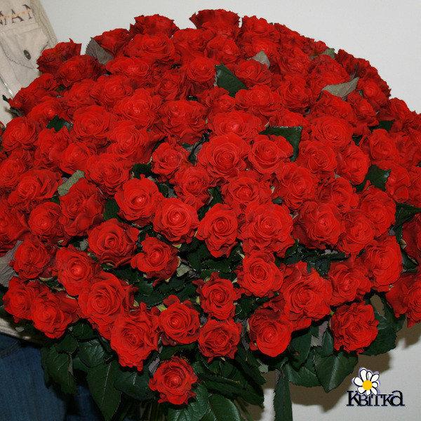 Днем прокуратуры, открытки с миллионом роз