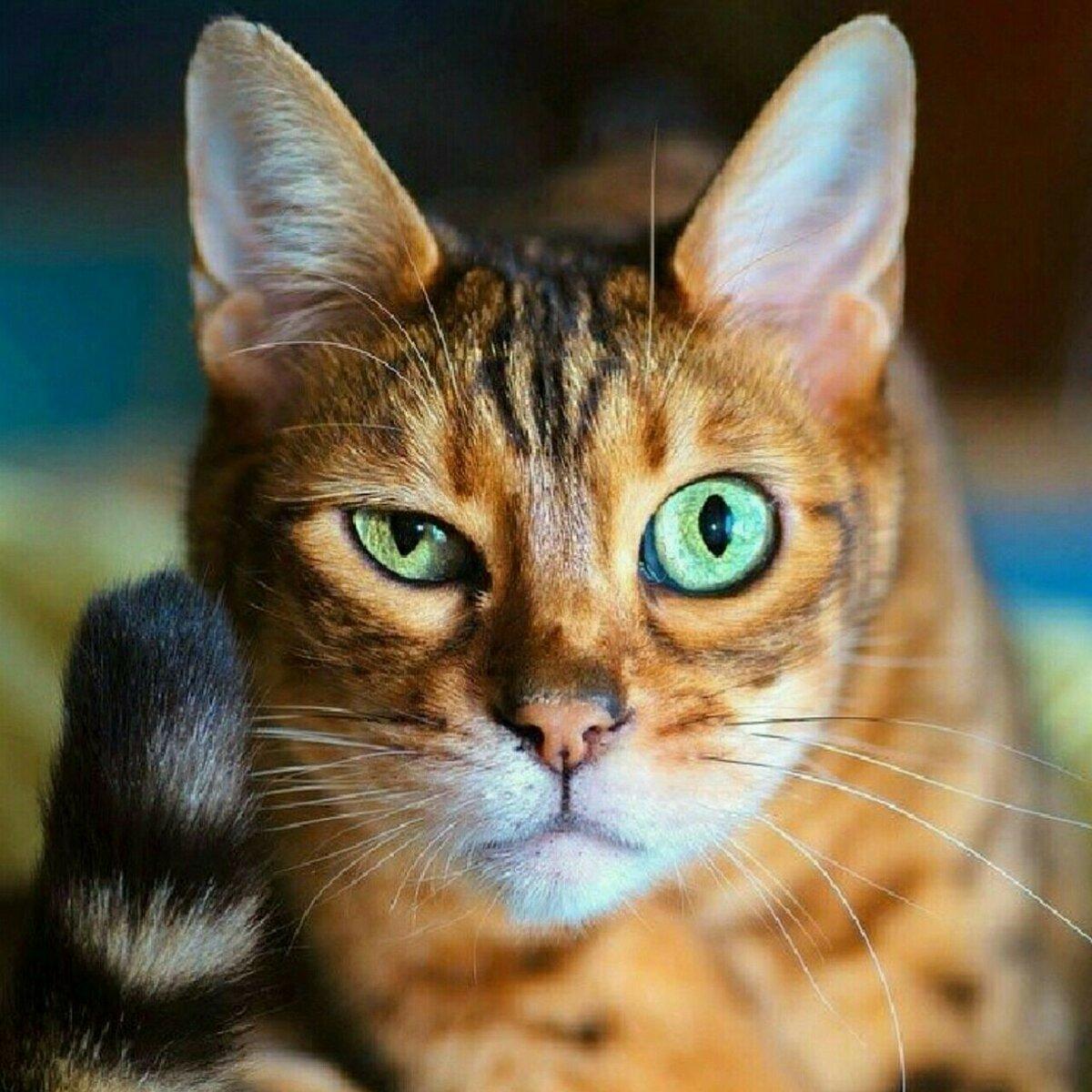 фото смешное выражение животных высказываний сможете