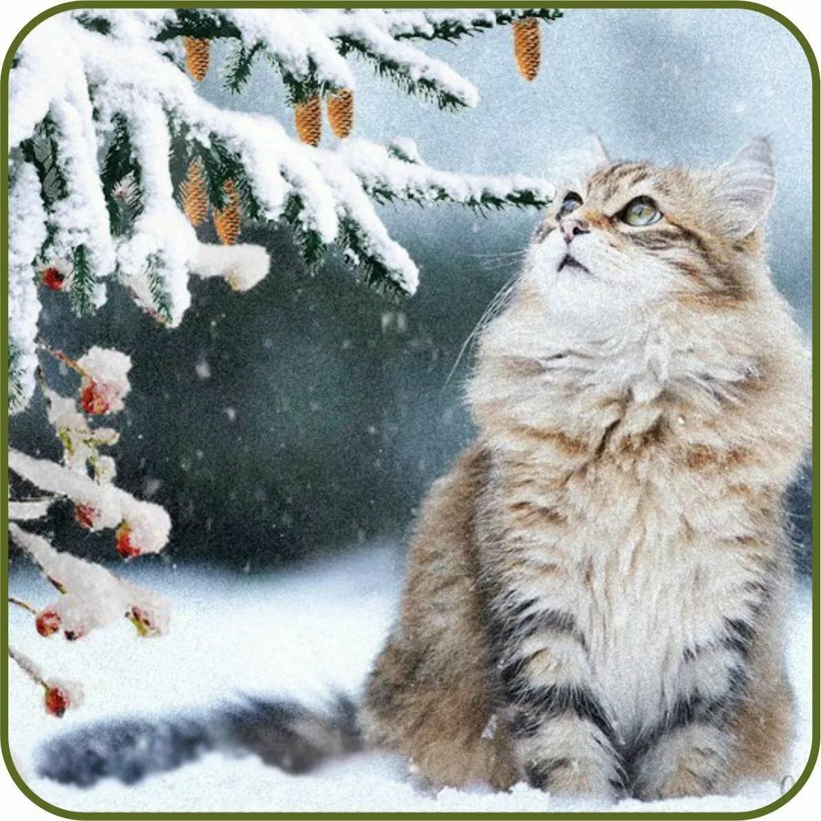 Яиц смешные, открытки с добрым утром с детьми и животными зимние