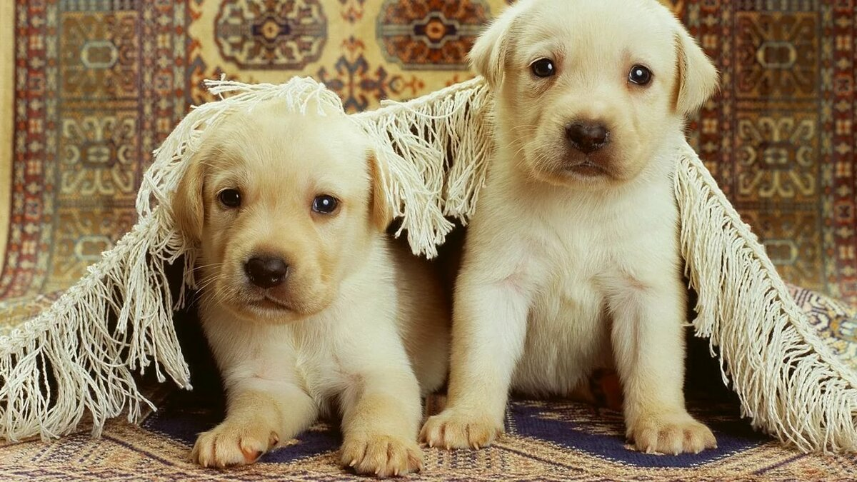 Картинки с щенками и надписями