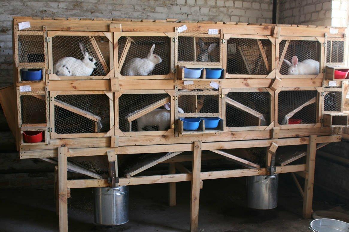 Домашняя мини-ферма в Артёме