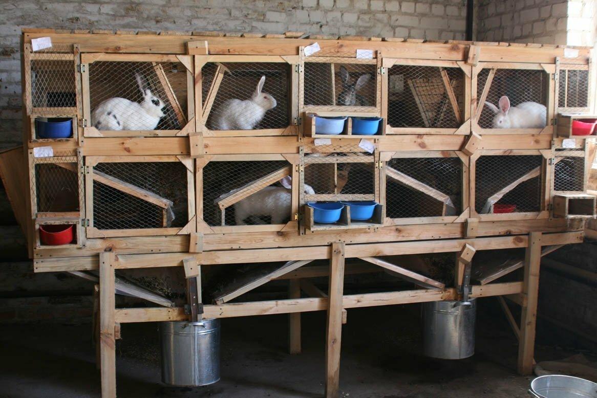 Домашняя мини-ферма в Абакане