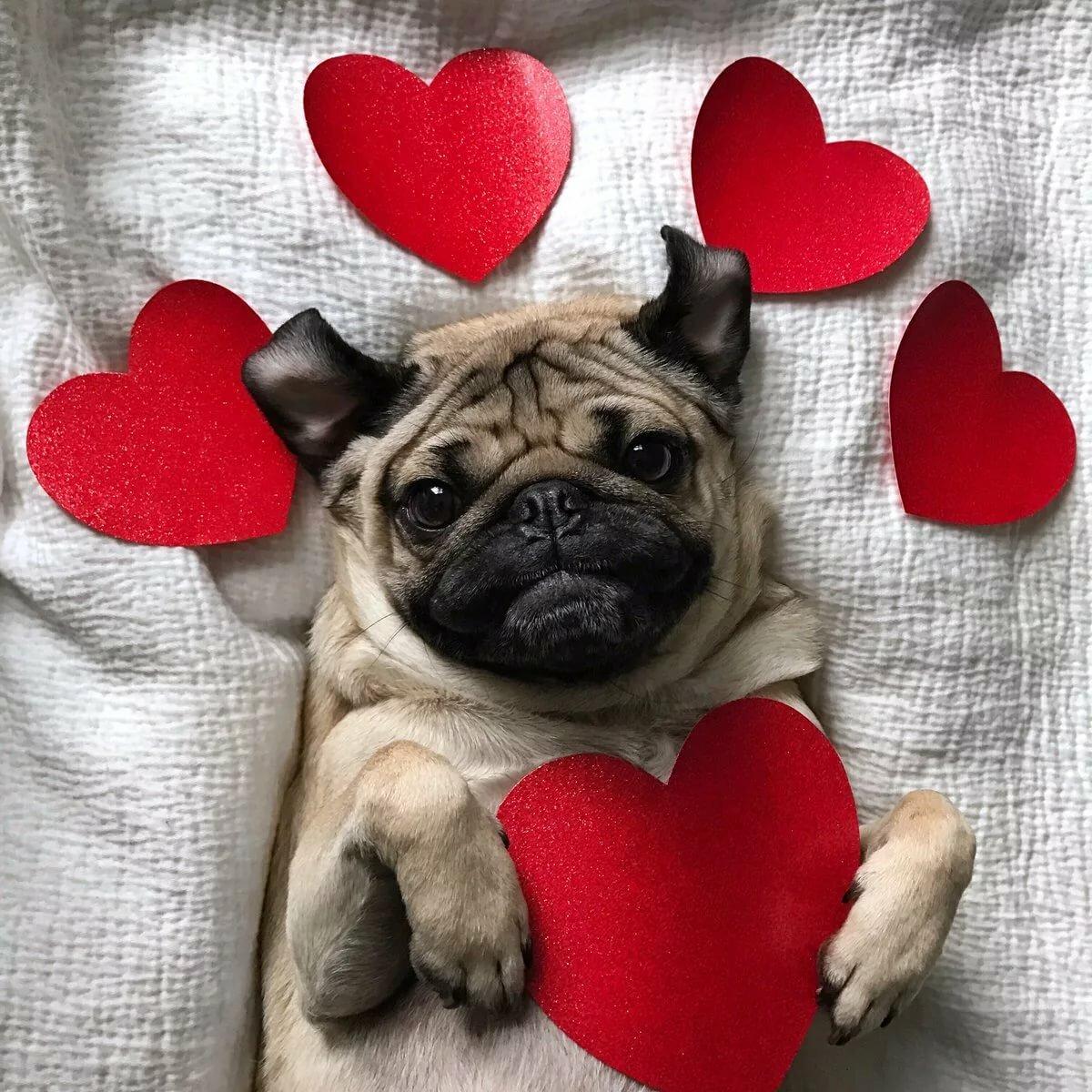 женщина картинки собачек с сердечком эти красавицы предпочитают