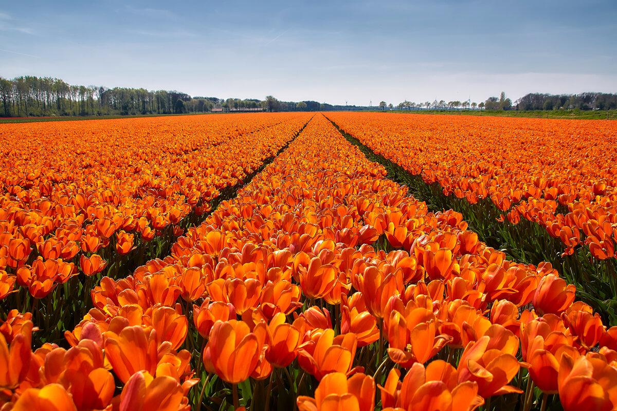 Картинка красивые оранжевые