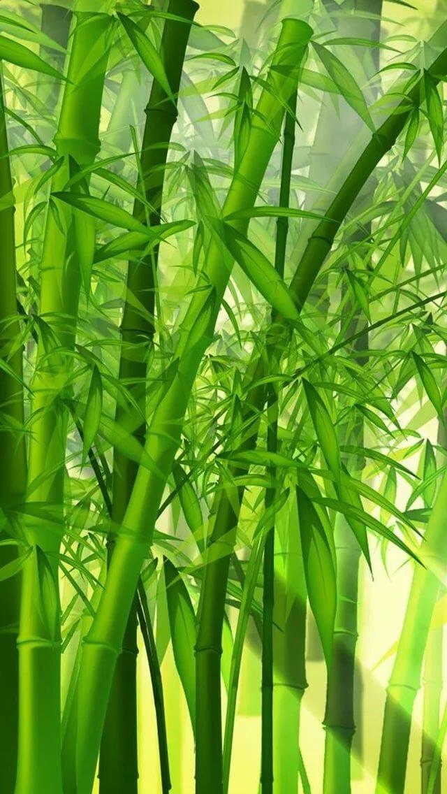 картинки бамбук для телефона почитаемая улица