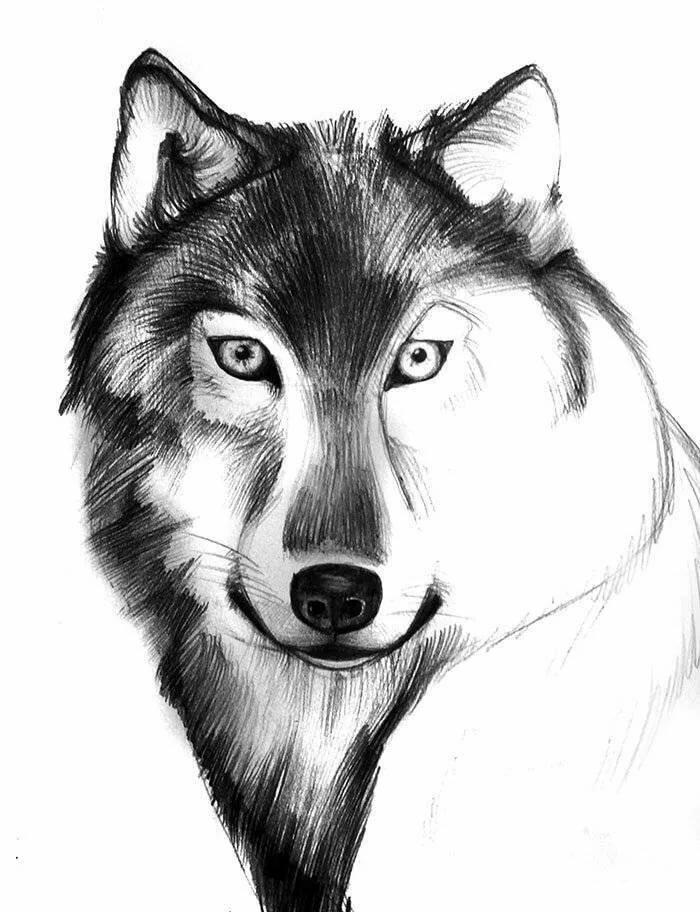 Картинки рисованных волков