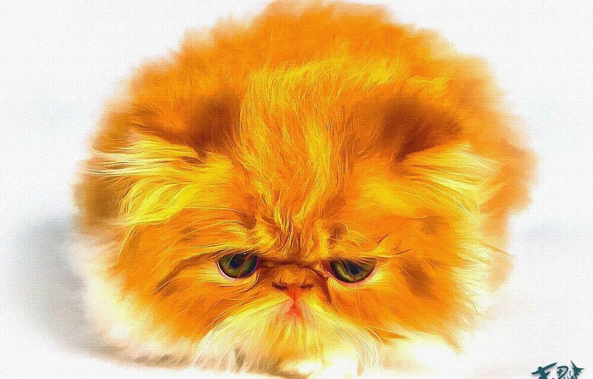 Картинки маленький персидский котенок