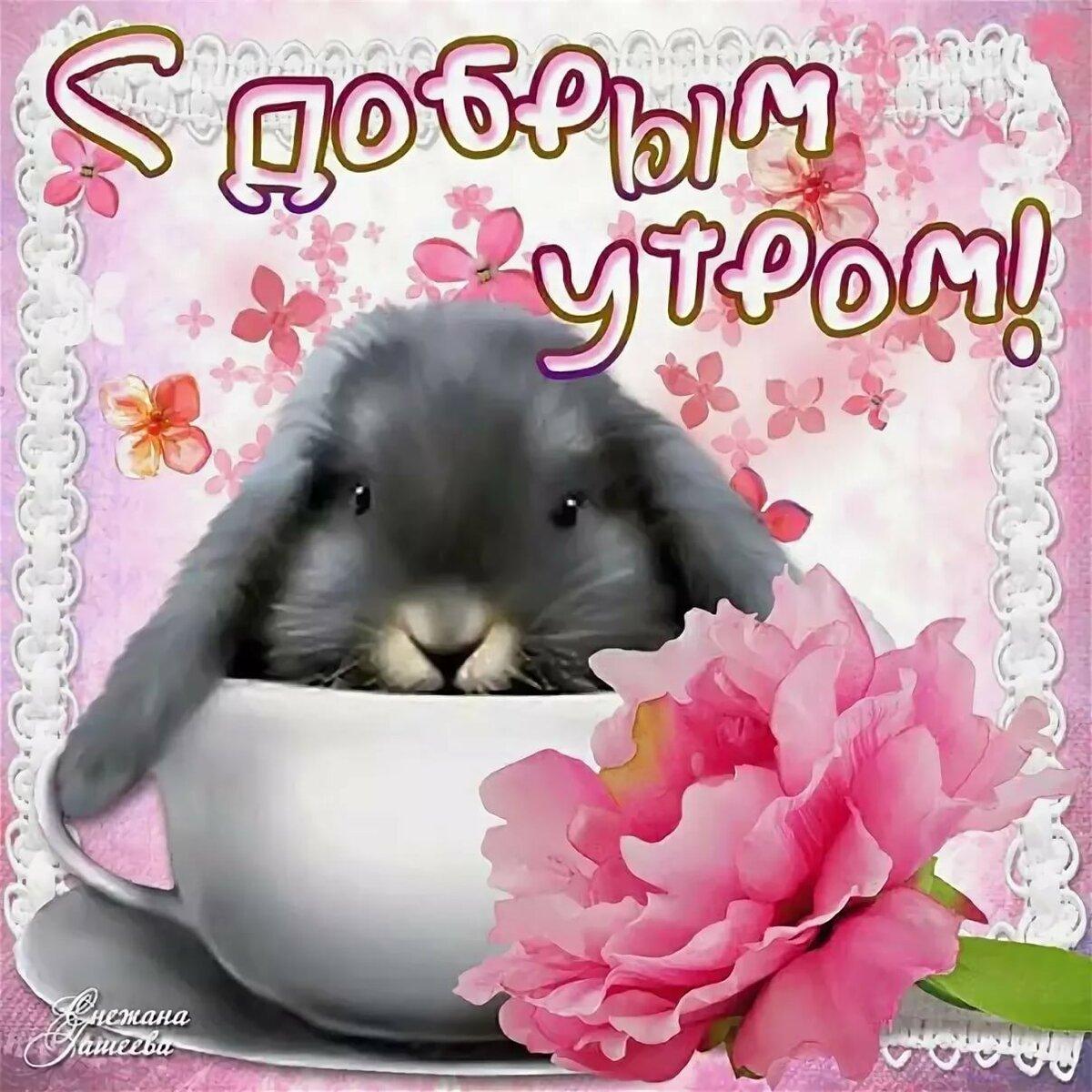 Днем, милые картинки привет доброго утра