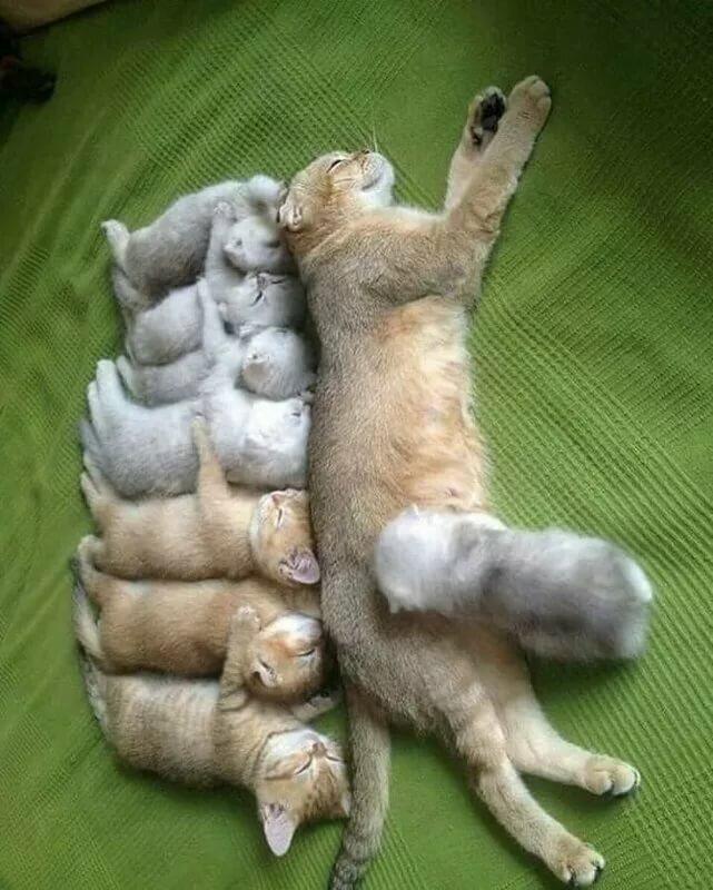 Для, смешные картинки кошек онлайн поднимающие настроение онлайн