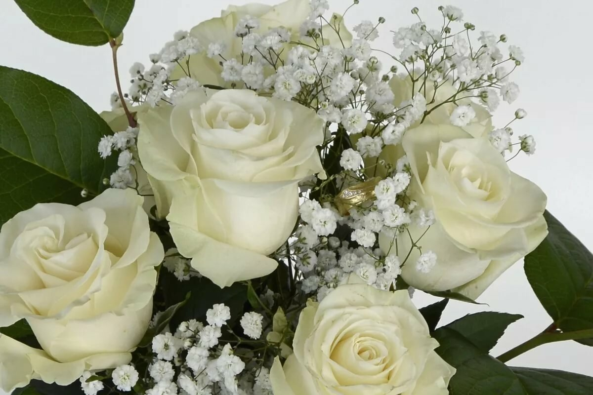 Картинка милашке белые розы