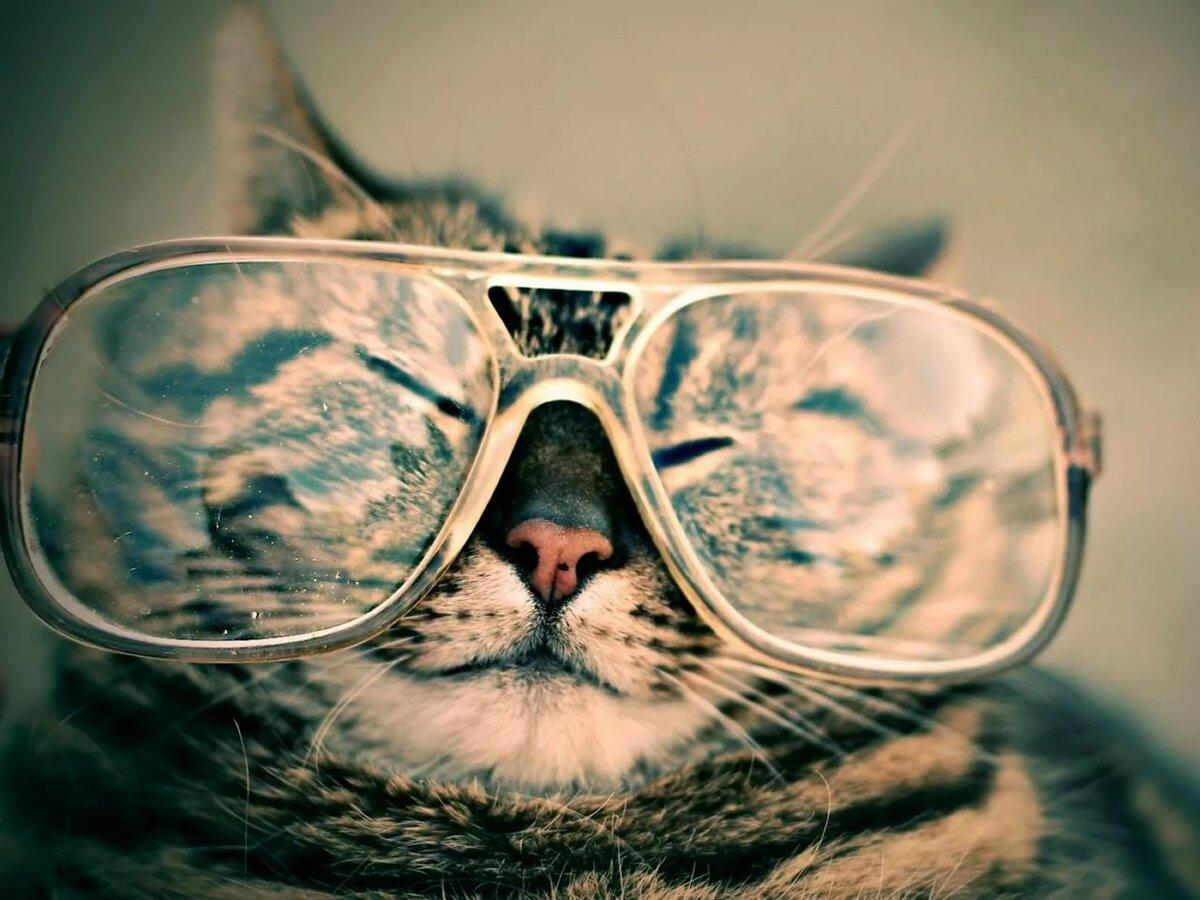 опасным врагом картинки с котята в очках намагничивает, набирает