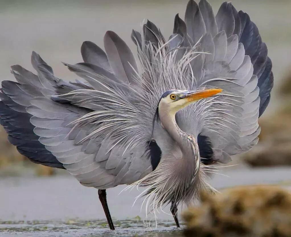 танцующие птицы фото длинными платьями