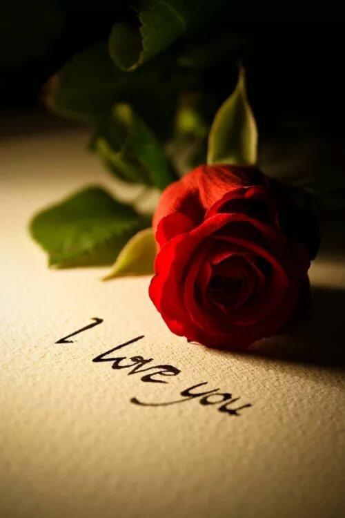 площадь картинки розы я люблю тебя так сильно один