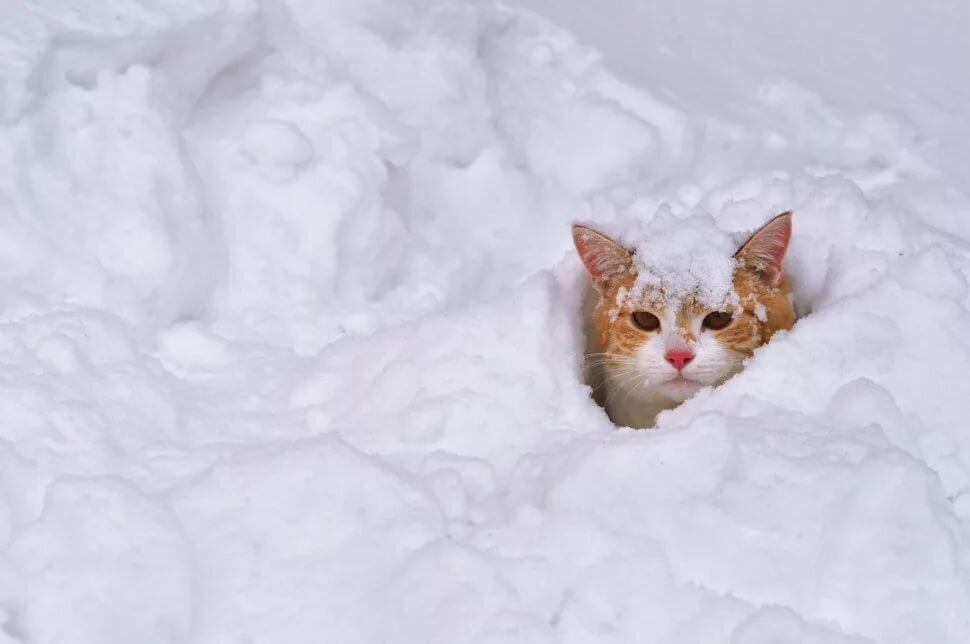 Приколы картинки снег