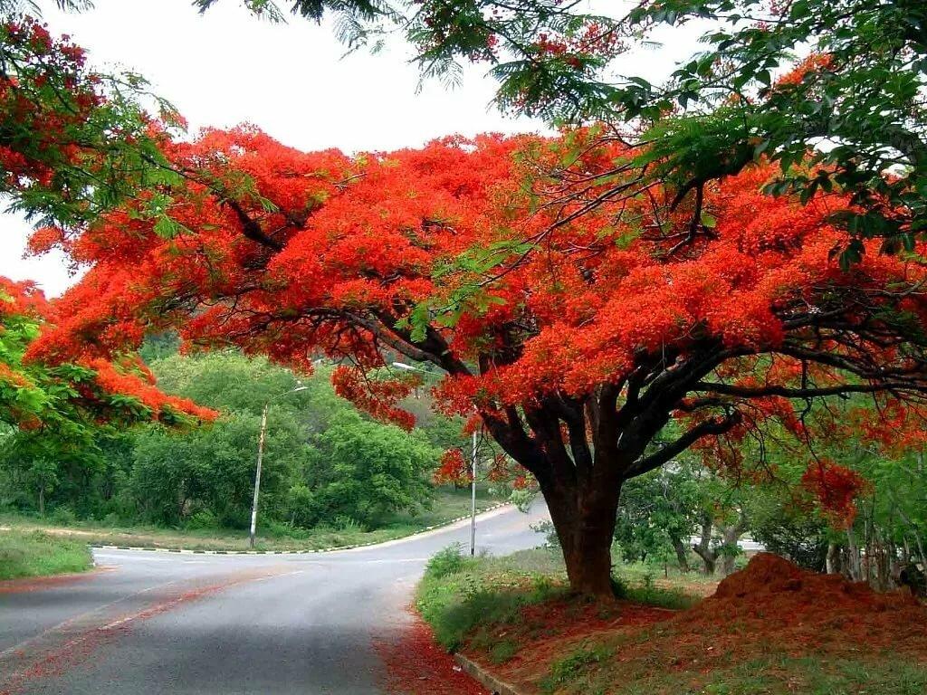 растения деревья фото год старалась ухаживать