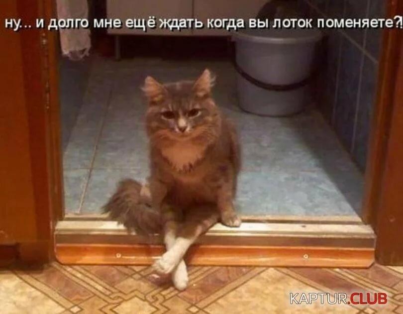 Рисунком, смешные картинки про котов кошек и котят до слез