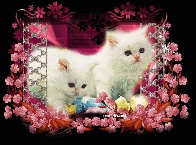 Открытки утро с кошками объектов