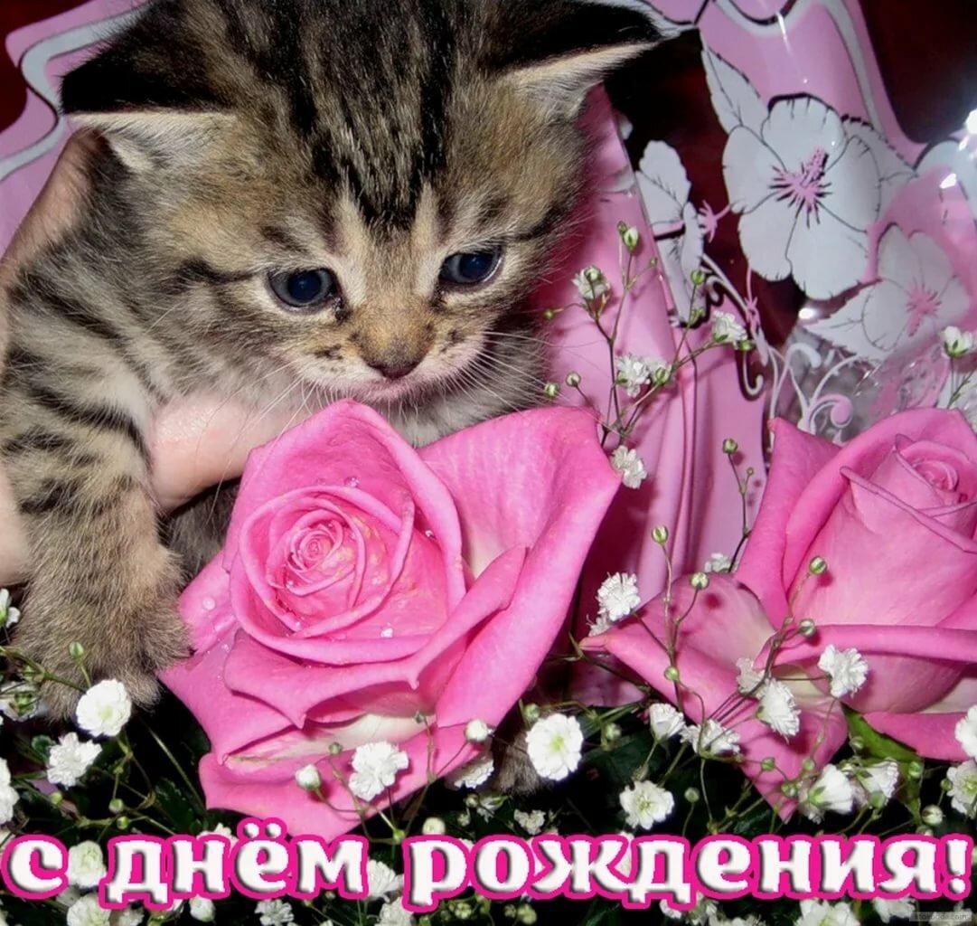 выглядит поздравление с днем рождения с котенком открытки мест
