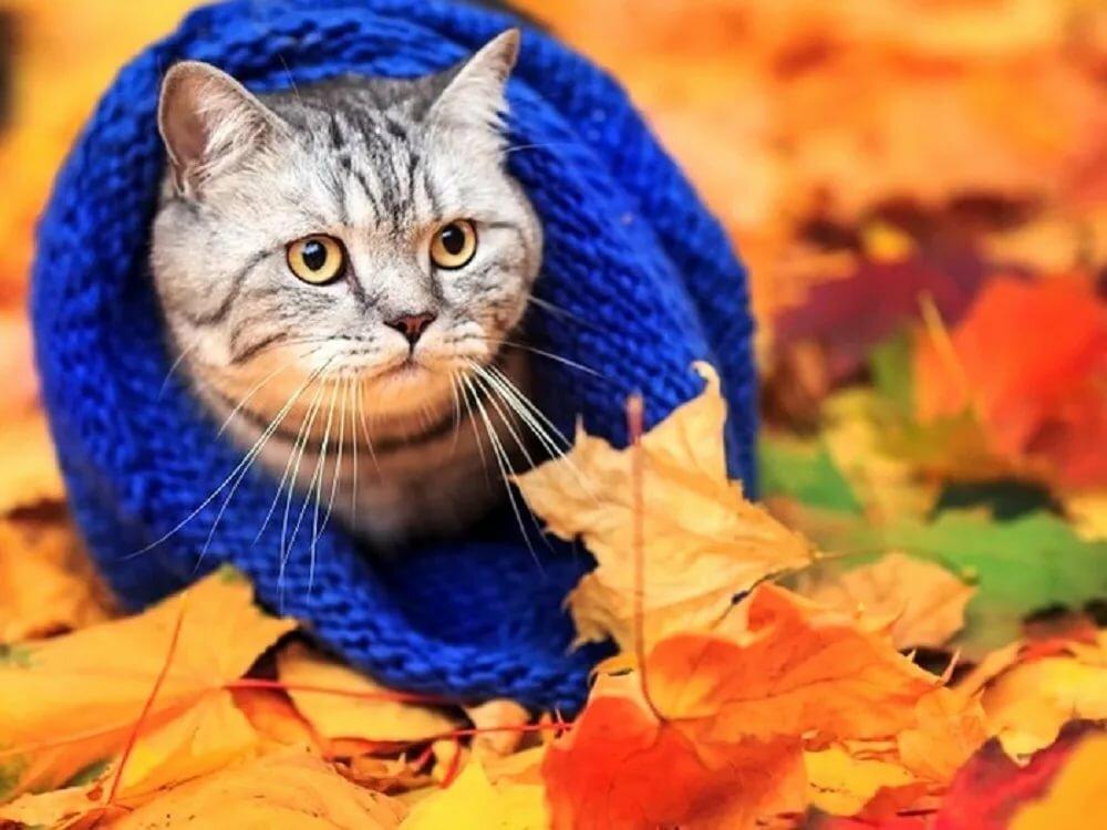 Октябрь смешные картинки, открытки юмором