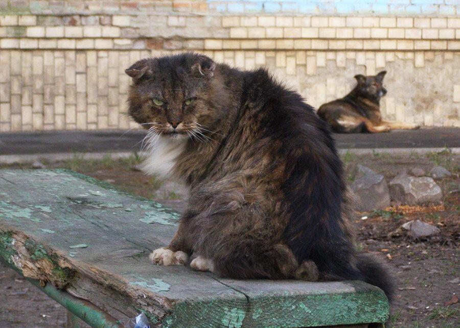 Фото кота живу бедно