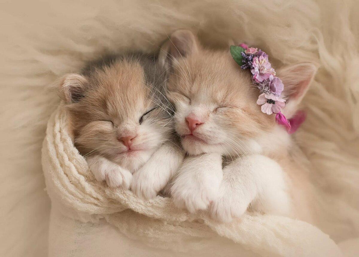 Картинки с котятами и с надписями для телефона