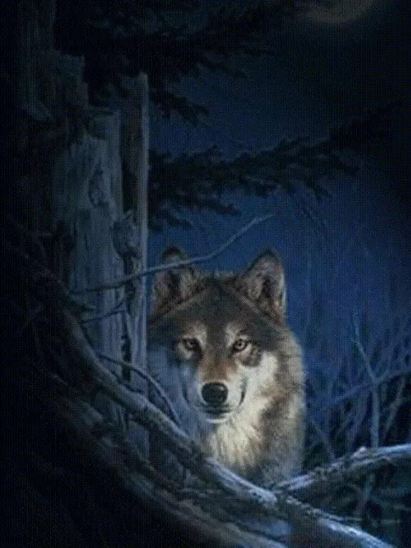Вечер картинки, анимация волков в картинках