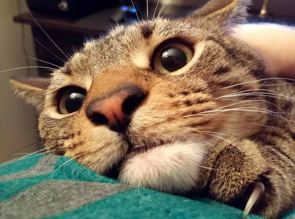 Кот прикол в картинках