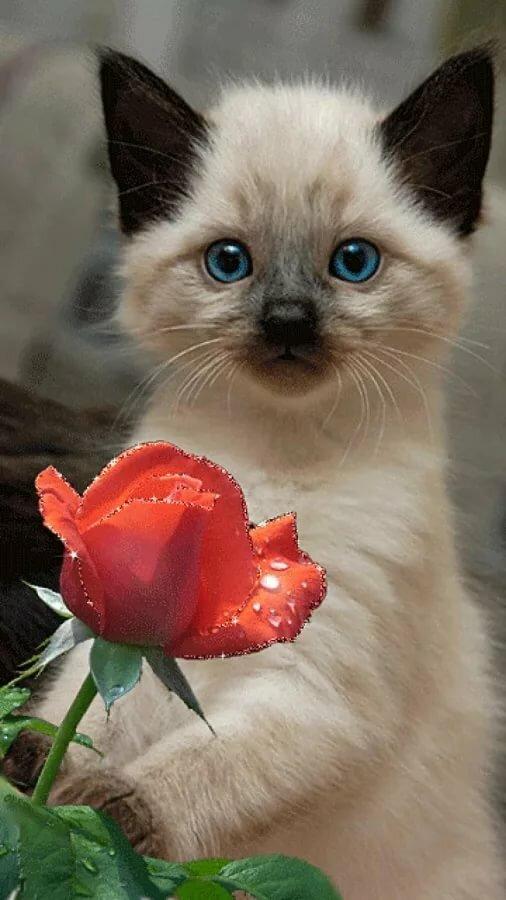 Куроко смешные, открытка самая красивая кошка