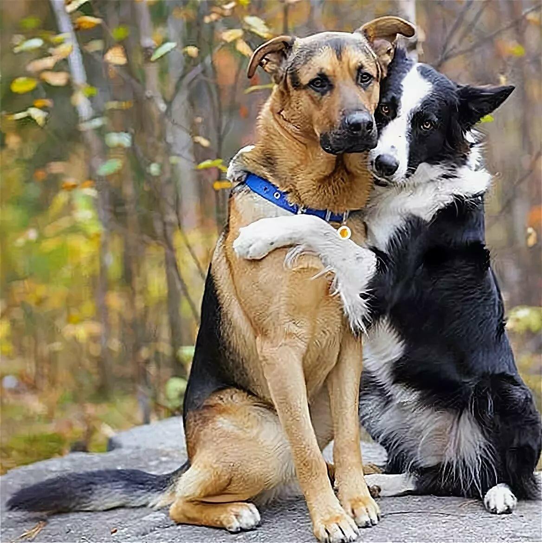 Обнимашки с собакой картинки