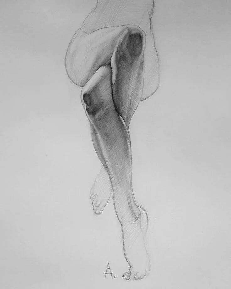 Части тела картинки в карандаше