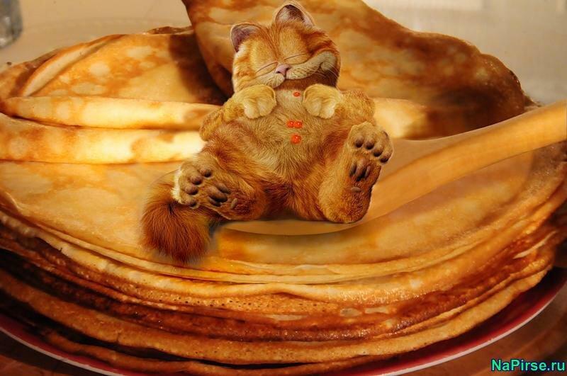 Блины и коты картинки