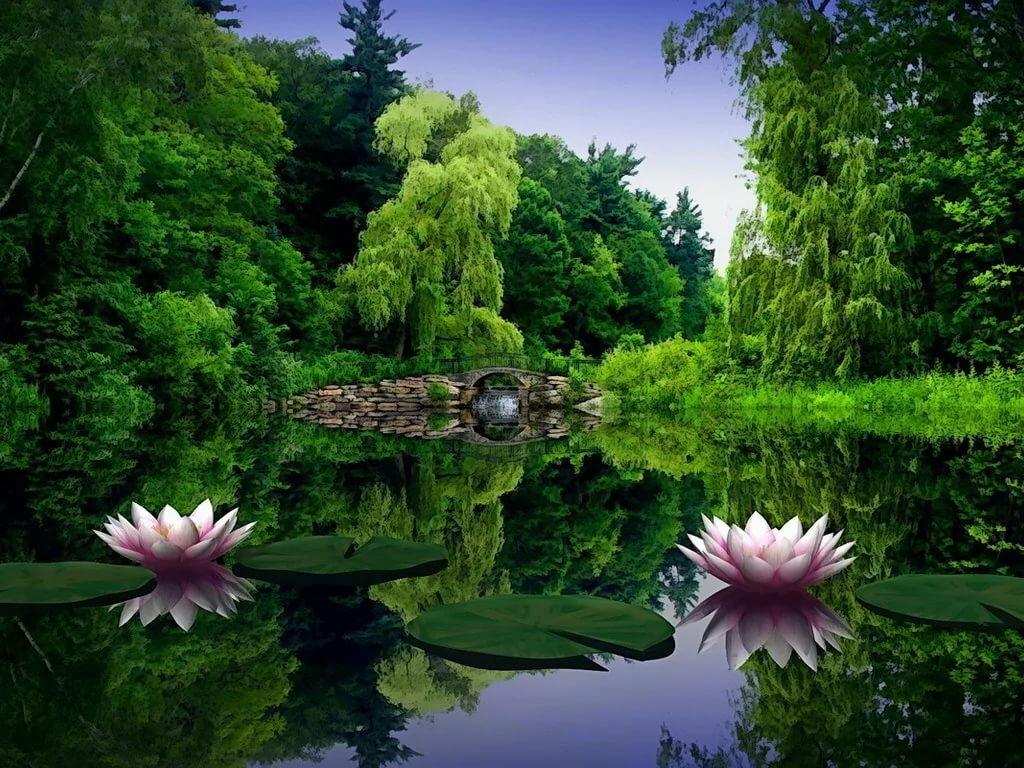 природа свежие картинки настоящее время большое