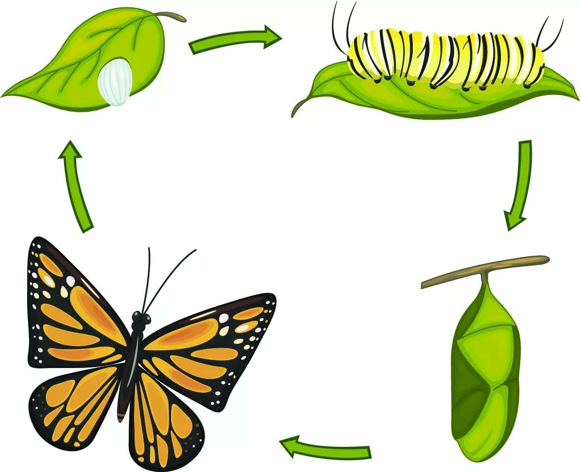 Картинки для детей гусеница и бабочка